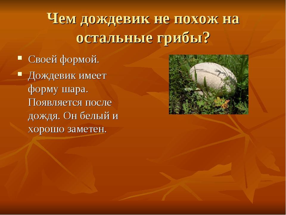 Чем дождевик не похож на остальные грибы? Своей формой. Дождевик имеет форму...