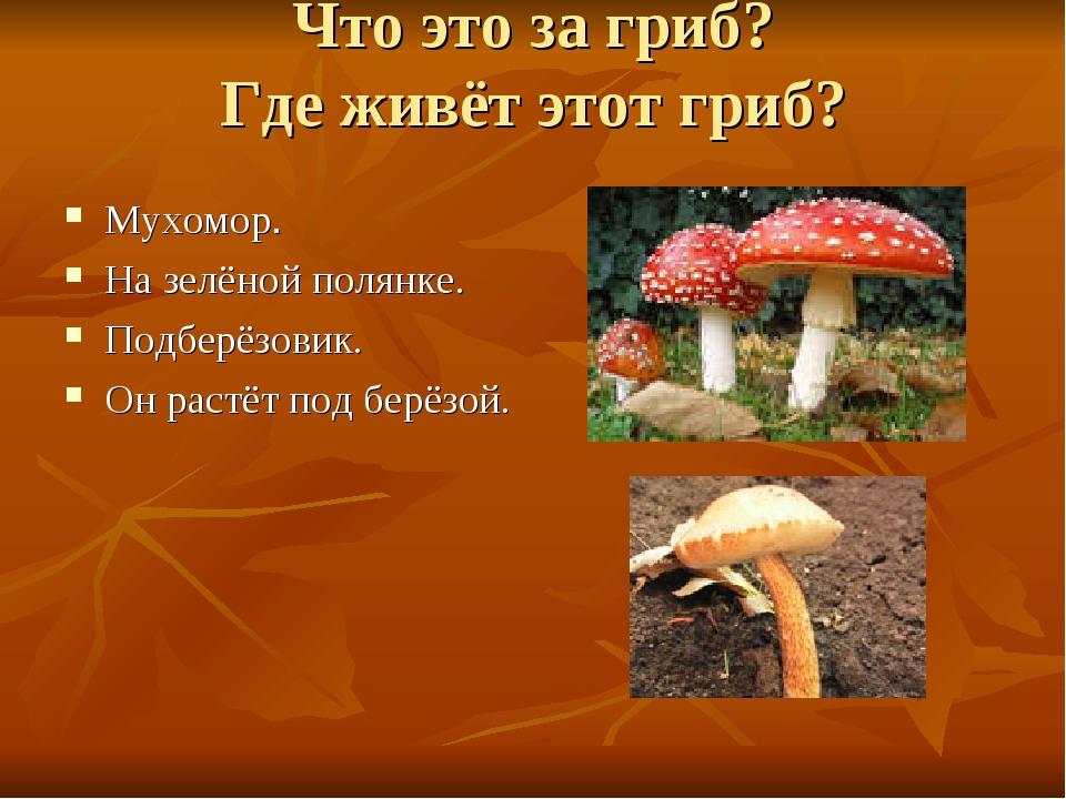 Что это за гриб? Где живёт этот гриб? Мухомор. На зелёной полянке. Подберёзов...