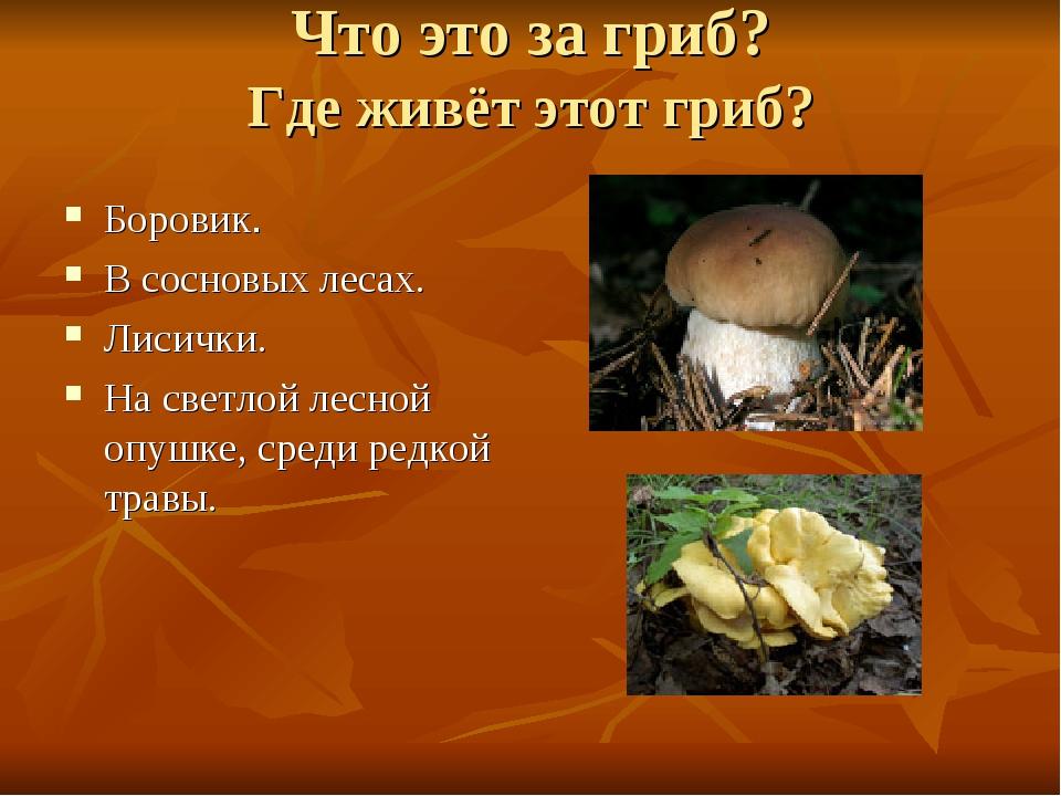 Что это за гриб? Где живёт этот гриб? Боровик. В сосновых лесах. Лисички. На...