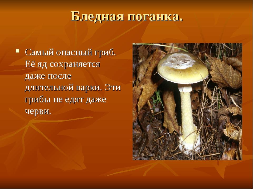 Бледная поганка. Самый опасный гриб. Её яд сохраняется даже после длительной...