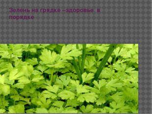 Зелень на грядке –здоровье в порядке