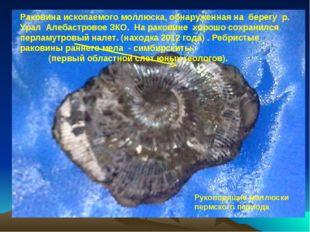 Раковина ископаемого моллюска, обнаруженная на берегу р. Урал Алебастровое ЗК