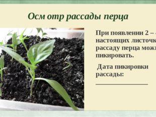 Осмотр рассады перца При появлении 2 – 4 настоящих листочков рассаду перца мо