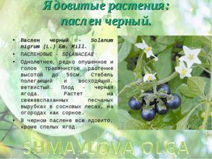 Ядовитые растения: паслен черный. Паслен черный - Solanum nigrum (L.) Em. Mil