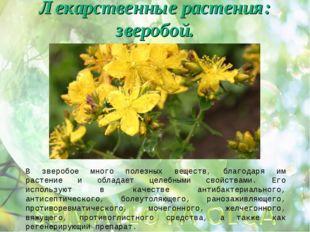 Лекарственные растения: зверобой. В зверобое много полезных веществ, благодар