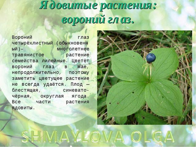 Ядовитые растения: вороний глаз. Вороний глаз четырёхлистный(обыкновенный)–...