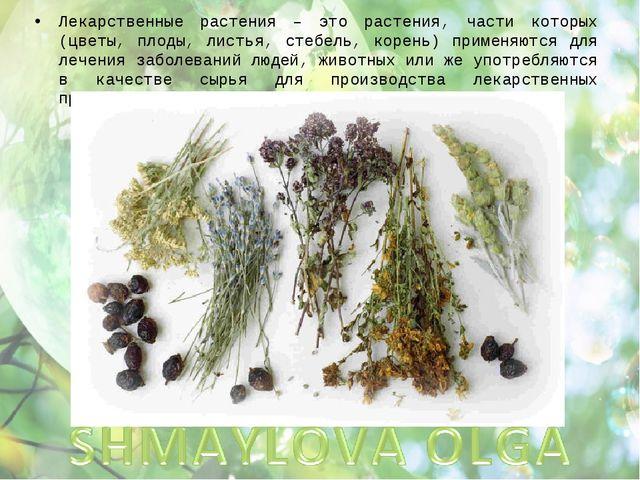 Лекарственные растения – это растения, части которых (цветы, плоды, листья, с...