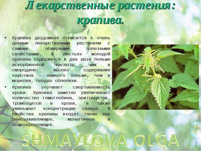 Лекарственные растения: крапива. Крапива двудомная относится к очень ценным л...