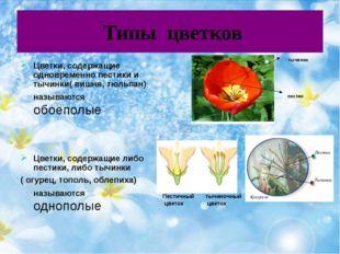 Типы цветков Цветки, содержащие одновременно пестики и тычинки( вишня, тюльп