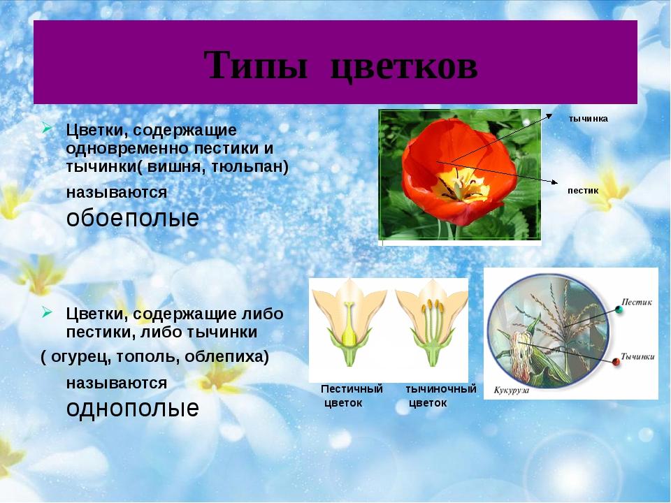 Типы цветков Цветки, содержащие одновременно пестики и тычинки( вишня, тюльп...