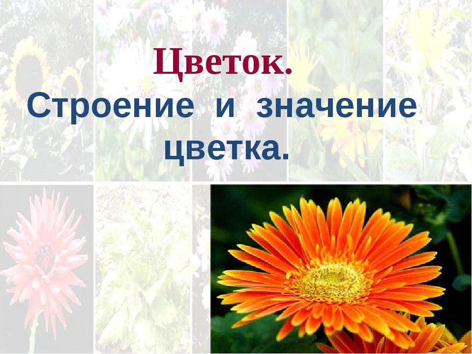 . Цветок. Строение и значение цветка.