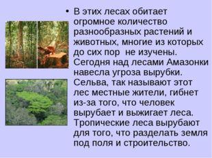 В этих лесах обитает огромное количество разнообразных растений и животных, м