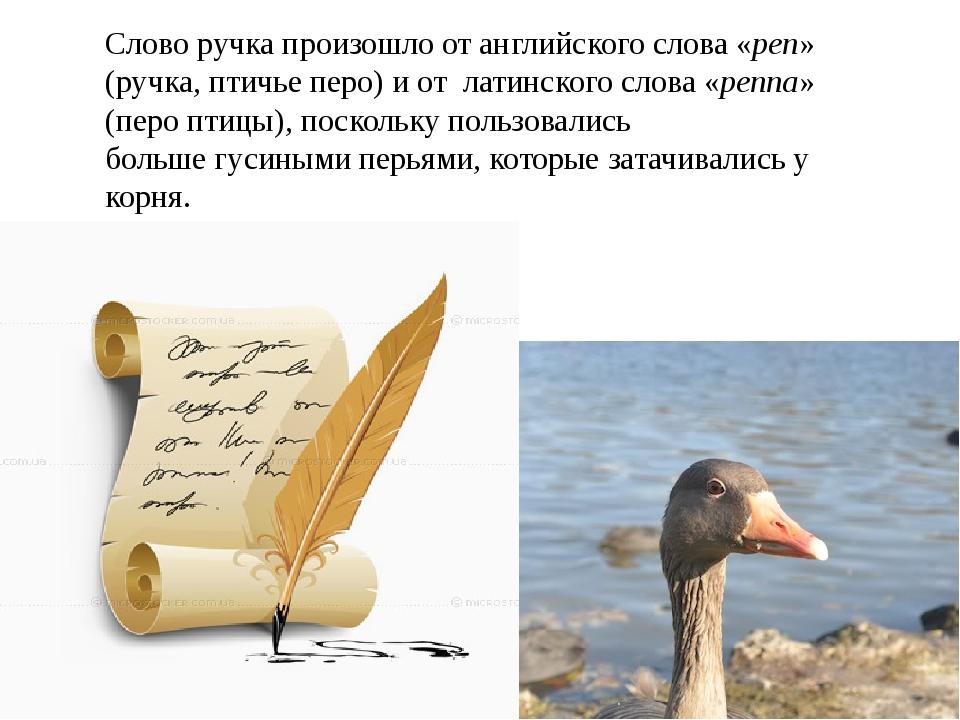 Слово ручка произошло от английского слова «pen» (ручка, птичье перо) и от ла...