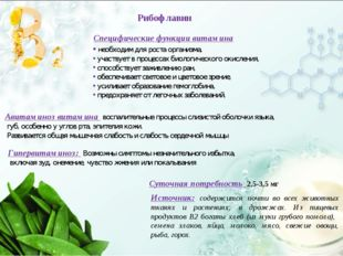 Специфические функции витамина необходим для роста организма, участвует в про