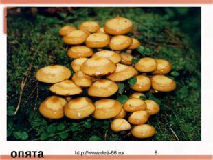 Нет грибов дружней, чем эти, Знают взрослые и дети. На пеньках растут в лесу,