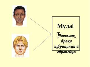 Мула́т Потомок брака африканца и европейца