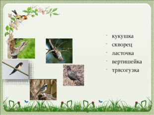 кукушка скворец ласточка вертишейка трясогузка