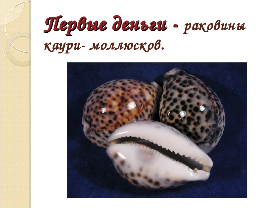 Первые деньги - раковины каури- моллюсков.