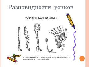 Разновидности усиков
