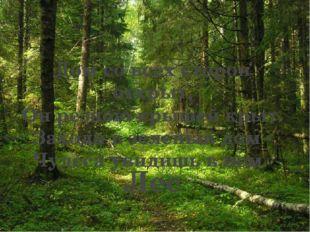 Лес Дом со всех сторон открыт, Он резною крышей крыт. Заходи в зеленый дом -