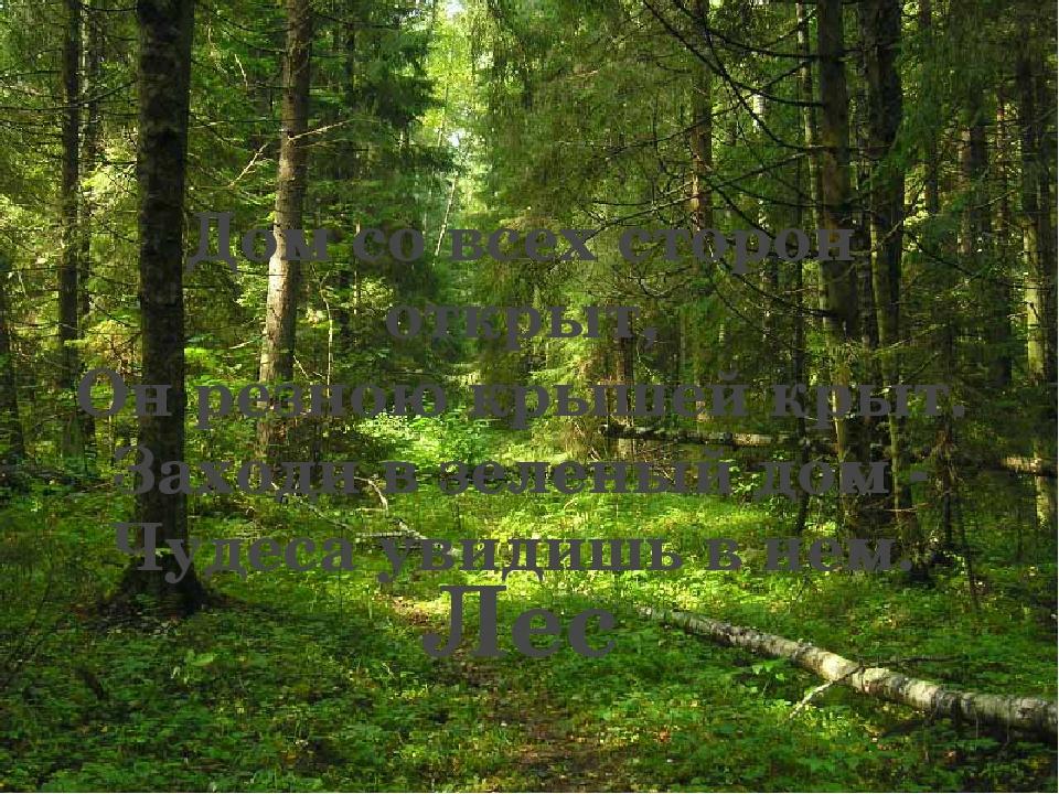 Лес Дом со всех сторон открыт, Он резною крышей крыт. Заходи в зеленый дом -...