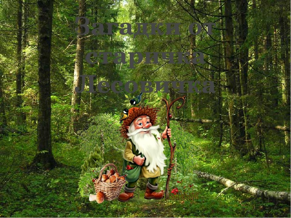 Конкурс день, картинка лесовичка для детей