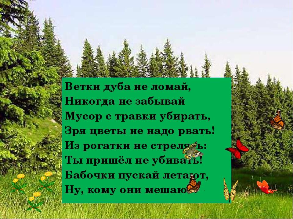 Ветки дуба не ломай, Никогда не забывай Мусор с травки убирать, Зря цветы не...