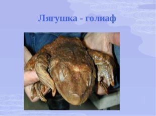 Лягушка - голиаф
