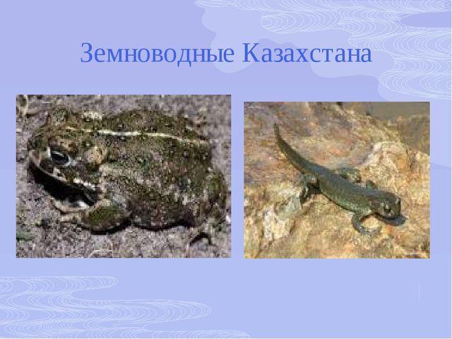 Земноводные Казахстана