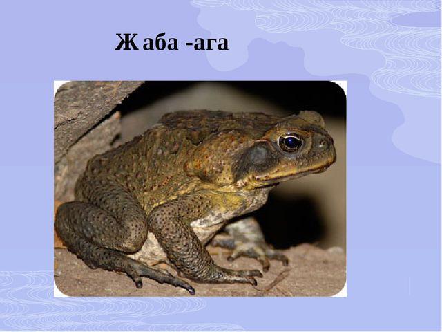 Жаба -ага