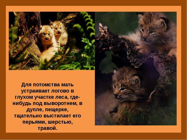 Для потомства мать устраивает логово в глухом участке леса, где-нибудь под в...