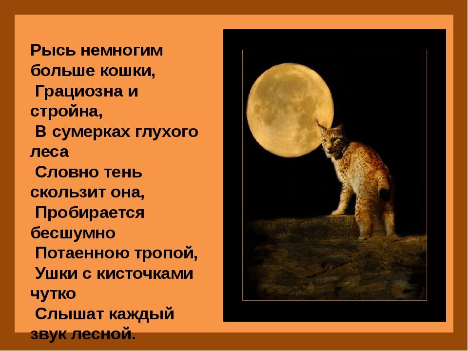 Рысь немногим больше кошки, Грациозна и стройна, В сумерках глухого леса Сло...