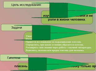 Цель исследования: изучить строение плесени и ее роли в жизни человека. Задач