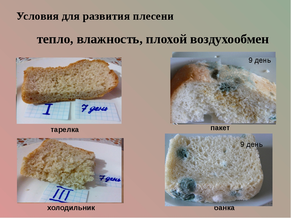 тарелка банка холодильник пакет Условия для развития плесени тепло, влажность...