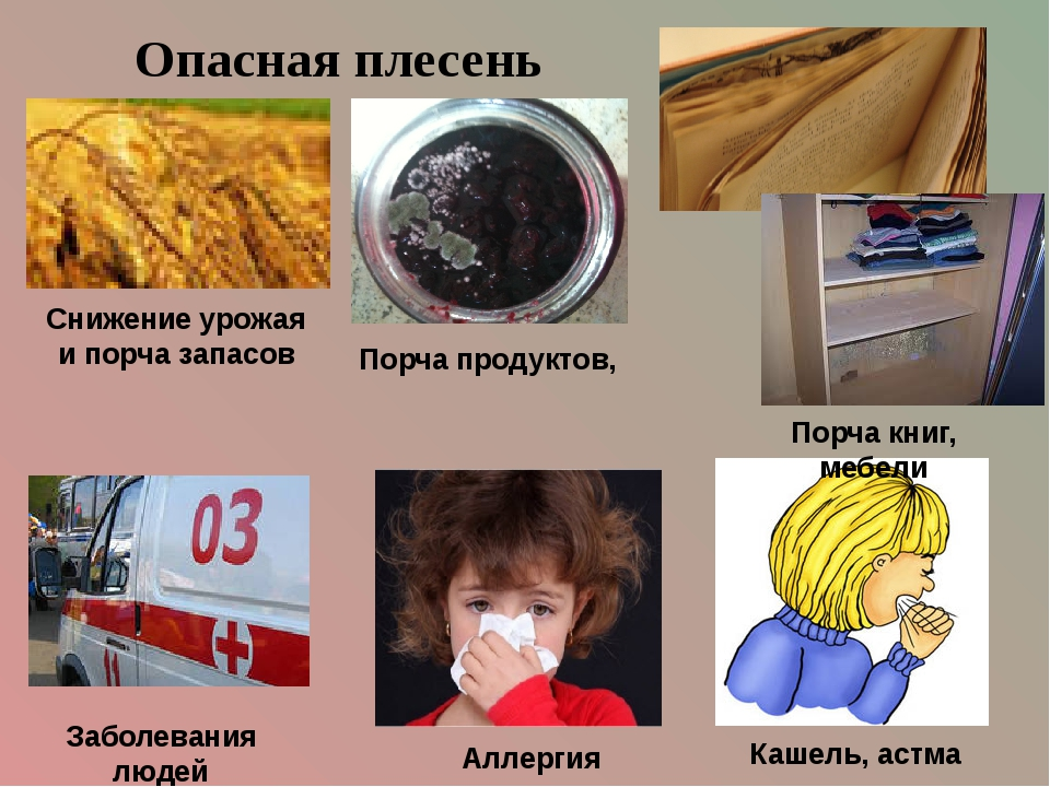 Опасная плесень Аллергия Заболевания людей Снижение урожая и порча запасов По...