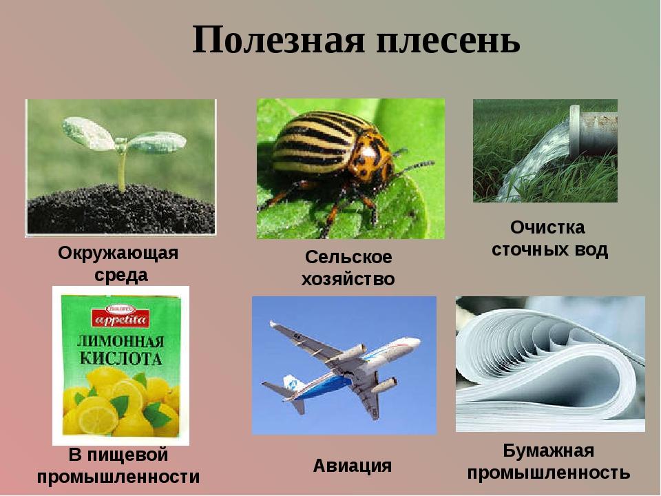 Полезная плесень Авиация Сельское хозяйство Окружающая среда Очистка сточных...