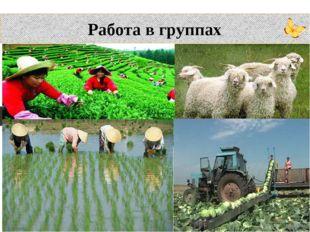Работа в группах – От чего будет зависеть развитие отраслей сельского хозяйст