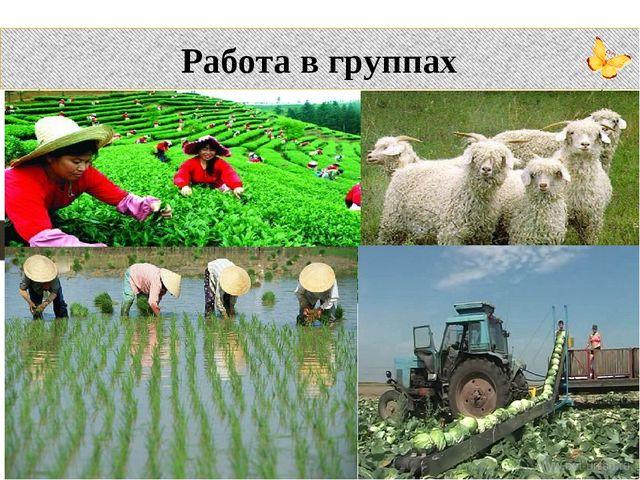 Работа в группах – От чего будет зависеть развитие отраслей сельского хозяйст...