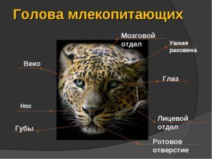 Голова млекопитающих Ушная раковина Глаз Веко Мозговой отдел Лицевой отдел Гу