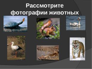 Рассмотрите фотографии животных