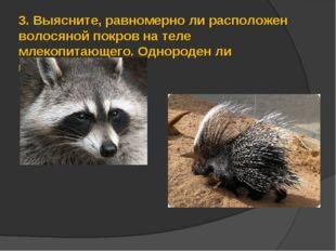 3.Выясните, равномерно ли расположен волосяной покров на теле млекопитающего