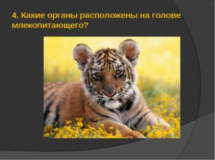 4.Какие органы расположены на голове млекопитающего?