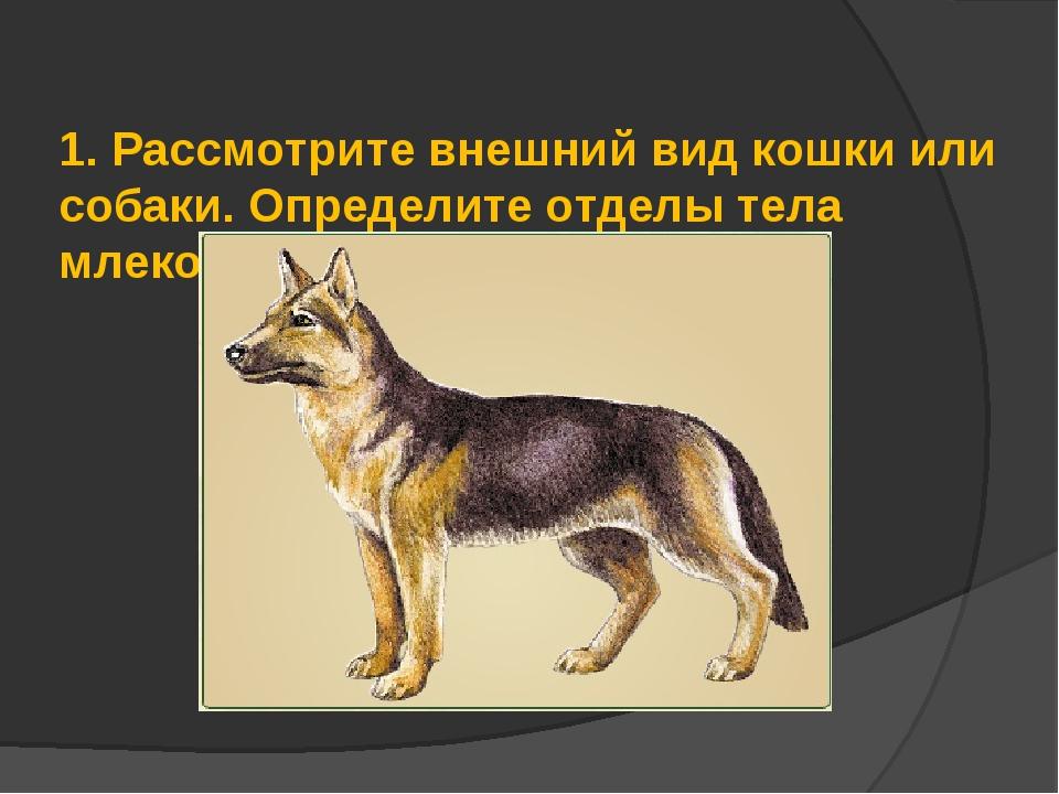 1.Рассмотрите внешний вид кошки или собаки. Определите отделы тела млекопит...