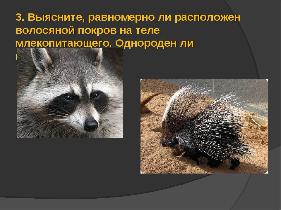 3.Выясните, равномерно ли расположен волосяной покров на теле млекопитающего...