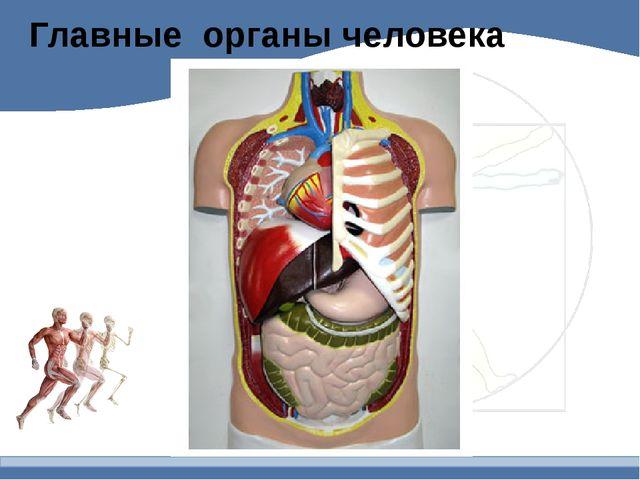 Главные органы человека