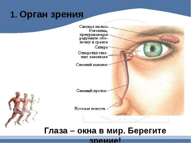 1. Орган зрения Глаза – окна в мир. Берегите зрение!