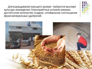Для выращивания хорошего урожая требуются высокая культура земледелия, благоп