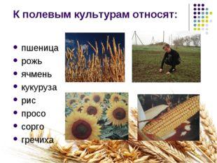 К полевым культурам относят: пшеница рожь ячмень кукуруза рис просо сорго гре