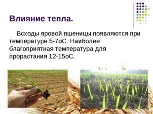 Влияние тепла. Всходы яровой пшеницы появляются при температуре 5-7оС. Наибол
