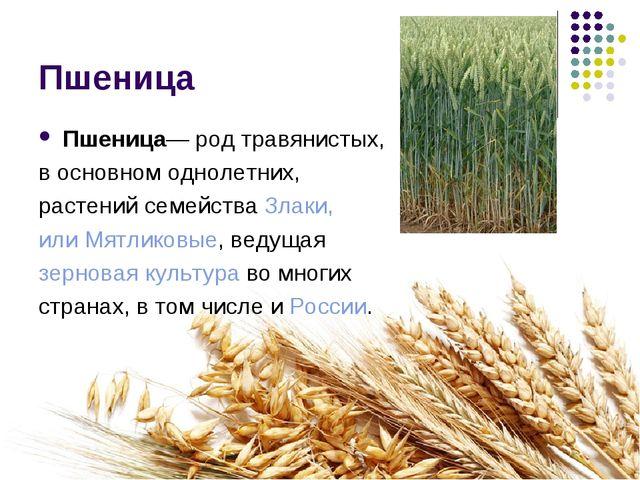 Пшеница Пшеница— род травянистых, в основном однолетних, растений семейства З...